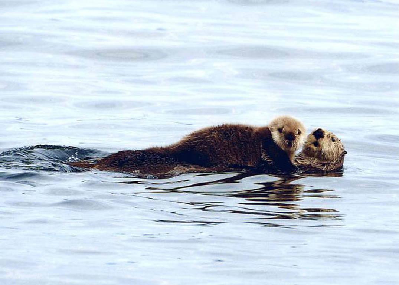 Sea Otter & Wildlife Quest - Allen Marine Tours