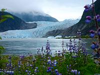 Mendenhall Glacier & Wildlife Quest