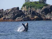 Wildlife Quest & Fin Island Lodge